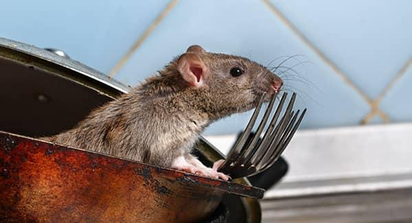3 Ways To Keep Your Home Free Of Rodents