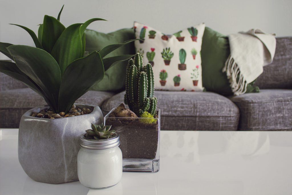 Best Tips for Your Eco-Friendly Home Décor