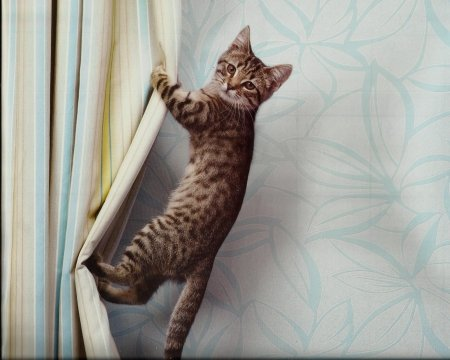 Dogs and Cats Ruining Your Curtains, here is what to do.